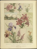 [Reproduction of Flower Studies, Painted with Munsell Water Colors [Plate], Color Notation, A Color Notation]