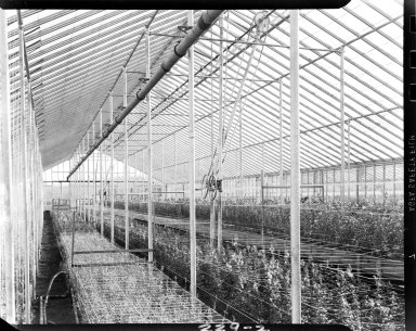 Blossom Shoppe greenhouse, interior, Kalamazoo, Michigan