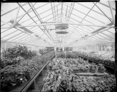 VanBochove & Bro., Inc., greenhouse, interior